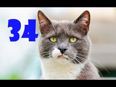Funny Cats Compilation #34