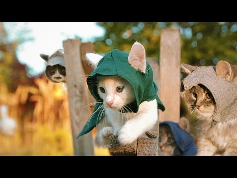 Sockersött: Assassin's Kittens Unity